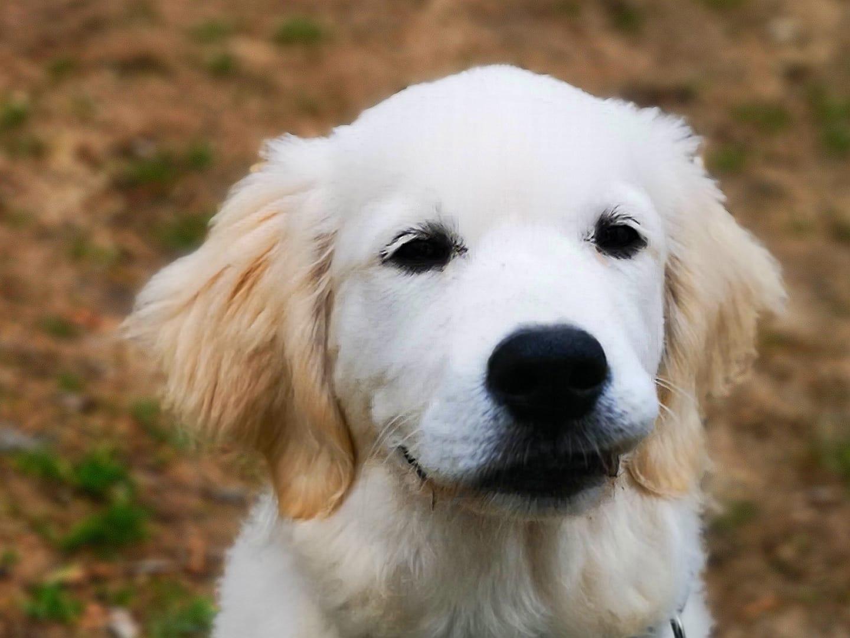 Welpenschule & Hundeschule Dog Trainer Mobil in Langenfeld und Solingen