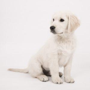 dog-2655468_1920