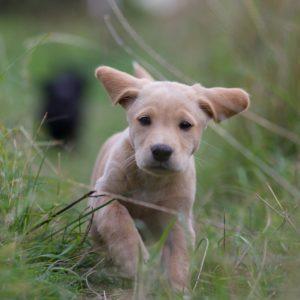 puppy-2642352_1920