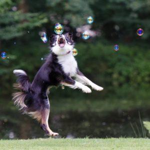 soap-bubbles-672642_1280
